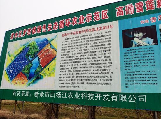工作人员走访白杨江农业公司基地.jpg